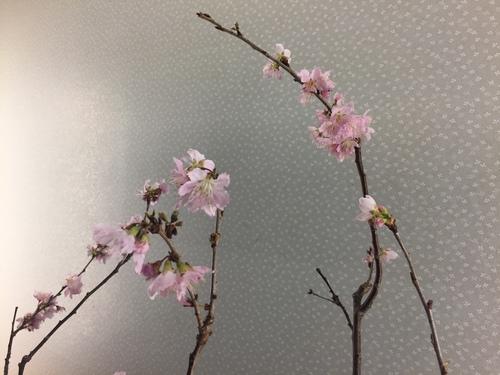 春の気配2.JPG