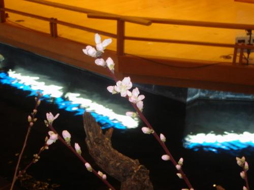 河口湖周辺 温泉宿 桃の花が咲きました!