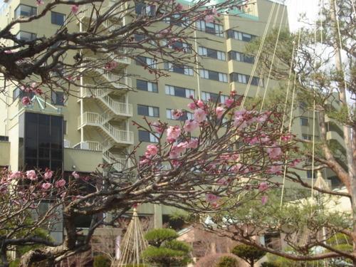 山梨県 温泉宿 「陽気は春です」