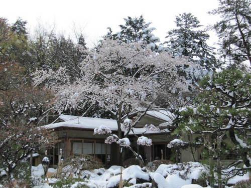 河口湖周辺 温泉宿「富士山を見るとホッとしますね」