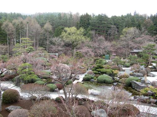 当館庭園の(桜)開花情報№3