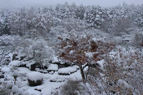 11月24日降雪情報