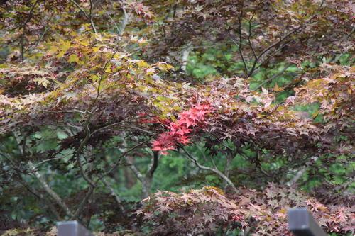庭園の紅葉情報No.3 富士山温泉ホテル鐘山苑