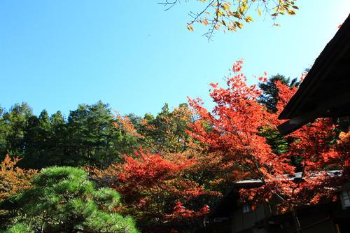 庭園の紅葉情報No.12 富士山温泉ホテル鐘山苑