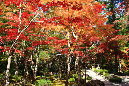 庭園の紅葉情報No.13 富士山温泉ホテル鐘山苑