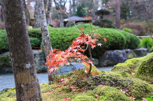 庭園の紅葉情報No.30 富士山温泉ホテル鐘山苑
