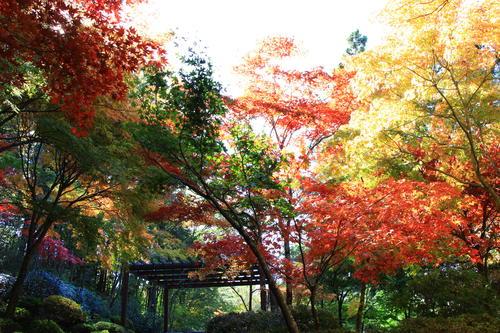 庭園の紅葉情報No.14 富士山温泉ホテル鐘山苑