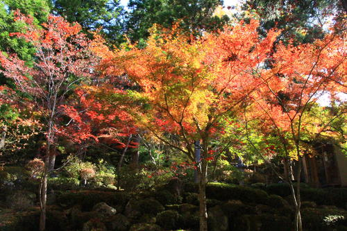 庭園の紅葉情報No.22 富士山温泉ホテル鐘山苑