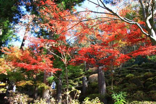 庭園の紅葉情報No.25 富士山温泉ホテル鐘山苑