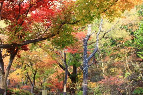 庭園の紅葉情報No.28 富士山温泉ホテル鐘山苑