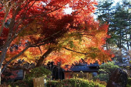 庭園の紅葉情報 最終 富士山温泉ホテル鐘山苑