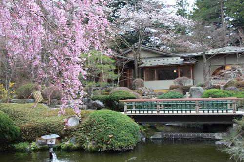 2018年庭園の梅・桜開花情報№9