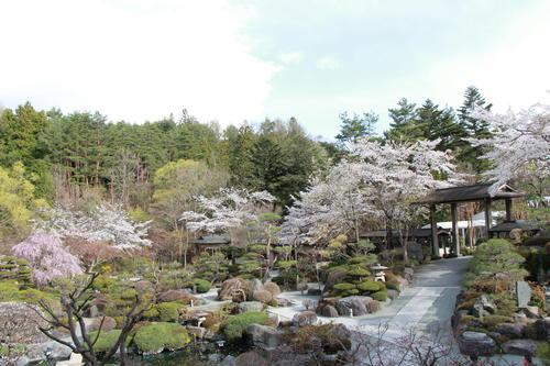 2018年庭園の梅・桜開花情報№12