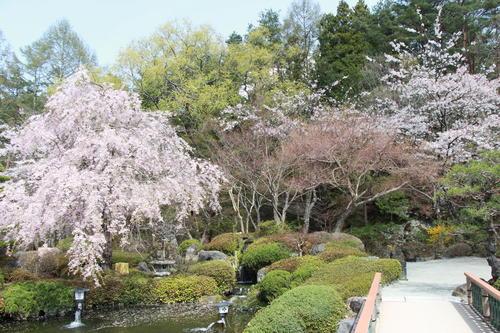 2018年庭園の梅・桜開花情報№14