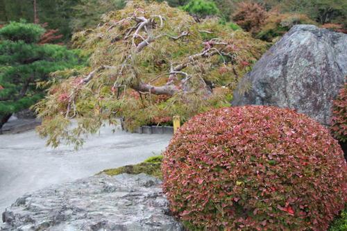 2018年庭園の紅葉情報No.5|富士山温泉ホテル鐘山苑