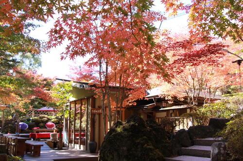 2018年庭園の紅葉情報No.13|富士山温泉ホテル鐘山苑