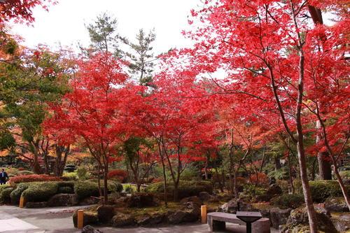 2018年庭園の紅葉情報No.15 富士山温泉ホテル鐘山苑