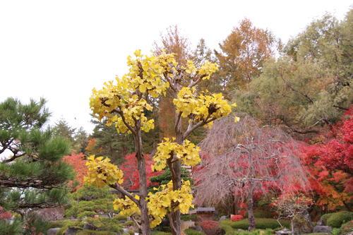 2018年庭園の紅葉情報No.20 富士山温泉ホテル鐘山苑