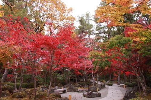2018年庭園の紅葉情報No.17 富士山温泉ホテル鐘山苑