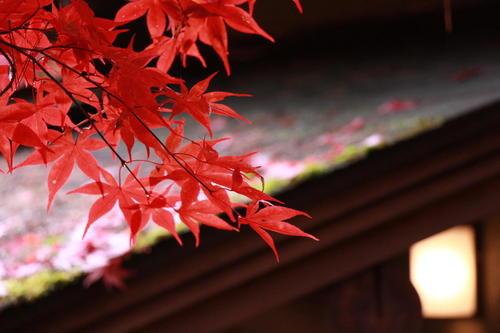 2018年庭園の紅葉情報No.19 富士山温泉ホテル鐘山苑