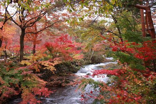 2018年庭園の紅葉情報No.21 富士山温泉ホテル鐘山苑
