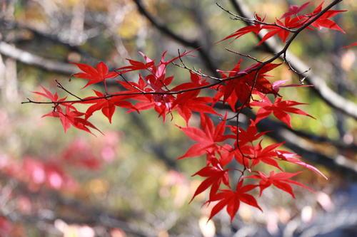 2018年庭園の紅葉情報 最終|富士山温泉ホテル鐘山苑