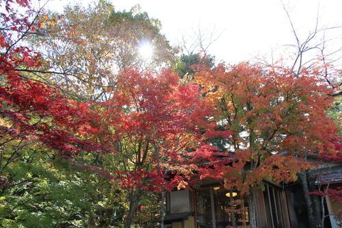 2018年庭園の紅葉情報No.16|富士山温泉ホテル鐘山苑