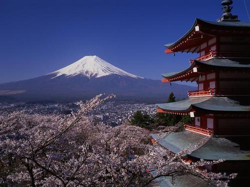 富士山と桜と五重塔!新倉山浅間公園・桜祭り 3/30~4/19
