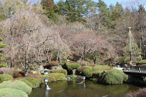 2019年庭園の梅・桜開花情報№10