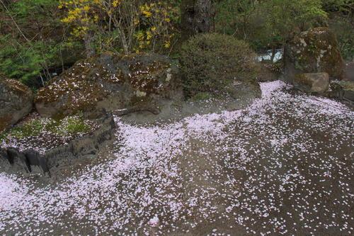 2019年庭園の梅・桜開花情報最終