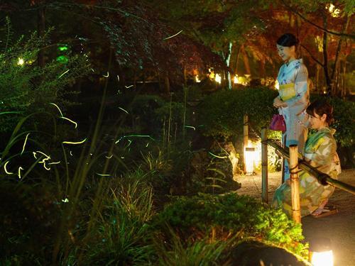 初夏の庭園・ほたるまつり(6/16~7/10)蛍観測情報