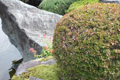 2019年庭園の紅葉情報No.1|富士山温泉ホテル鐘山苑