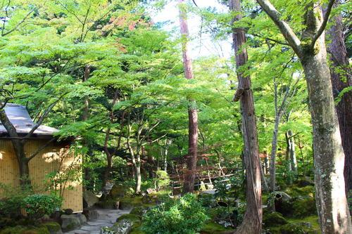 2019年庭園の紅葉情報No.3|富士山温泉ホテル鐘山苑