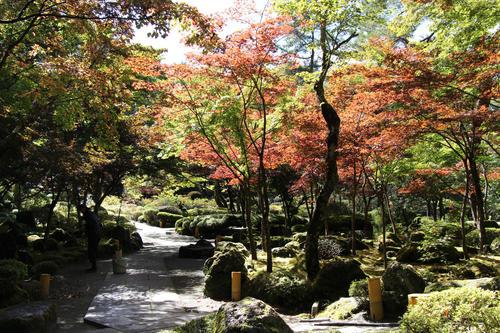 2019年庭園の紅葉情報No.6|富士山温泉ホテル鐘山苑