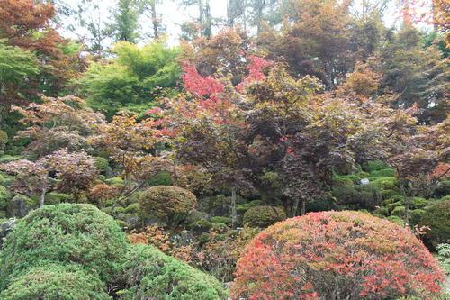 2019年庭園の紅葉情報No.8|富士山温泉ホテル鐘山苑
