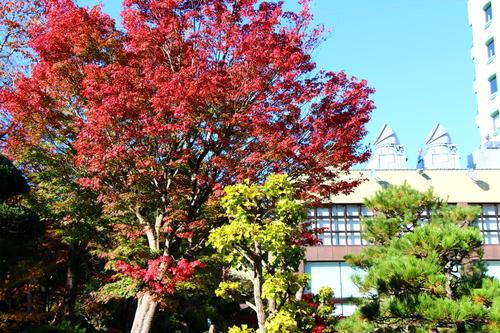 2019年庭園の紅葉情報No.18|富士山温泉ホテル鐘山苑