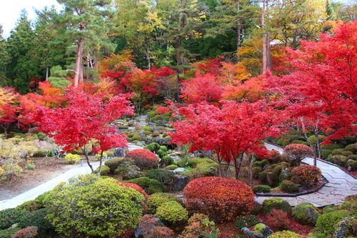 2019年庭園の紅葉情報No.21|富士山温泉ホテル鐘山苑