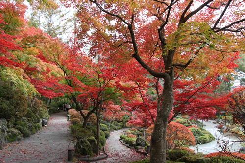2019年庭園の紅葉情報No.19|富士山温泉ホテル鐘山苑